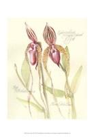 Elissa's Garden VIII Fine Art Print