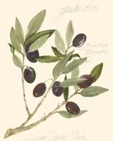 Gaeta Olives Fine Art Print