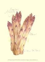 Argenteuil Asparagus Fine Art Print