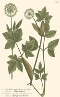 Leaves IV Fine Art Print