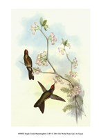 "Single Gould Hummingbird (IP) I - 5"" x 7"", FulcrumGallery.com brand"