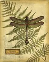 Royal Dragonflies III Fine Art Print