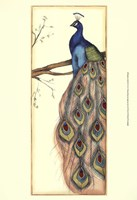Small Rebecca's Peacock II (P) Fine Art Print