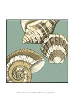 """Small Shell Trio on Blue II (P) by Megan Meagher - 10"""" x 13"""""""