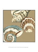 """Small Shell Trio on Khaki II (P) by Megan Meagher - 10"""" x 13"""""""