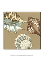 "Small Shell Trio on Khaki III (P) by Megan Meagher - 10"" x 13"""