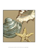 """Small Shell Trio on Khaki IV (P) by Megan Meagher - 10"""" x 13"""""""