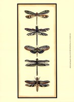 """Small Dragonfly Collector II (P) by Chariklia Zarris - 10"""" x 13"""""""