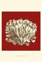 "Small Coral on Red III (P) by Vision Studio - 13"" x 19"""