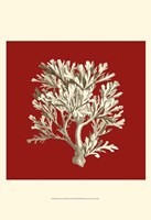 "Small Coral on Red IV (P) by Vision Studio - 13"" x 19"""