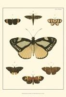 Small Heirloom Butterflies II (P) Fine Art Print