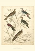 Small Avian Habitat I (P) Fine Art Print