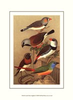 Cassel's Petite Songbirds I Fine Art Print