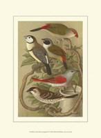 Cassel's Petite Songbirds II Fine Art Print