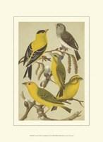 Cassel's Petite Songbirds III Fine Art Print