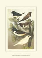 Cassel's Petite Songbirds IV Fine Art Print