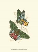 Butterflies III Fine Art Print