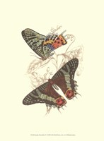 """10"""" x 13"""" Butterfly Pictures"""