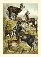 Johnson's Antelope Fine Art Print