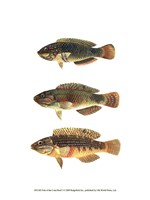 "10"" x 13"" Saltwater Fish"