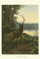 "13"" x 19"" Moose Pictures"
