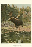 """Moose by Oliver Kemp - 13"""" x 19"""""""