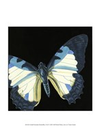 """Small Dramatic Butterflies I by Vision Studio - 10"""" x 13"""""""
