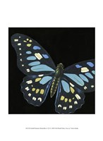 """Small Dramatic Butterflies II by Vision Studio - 10"""" x 13"""" - $10.49"""