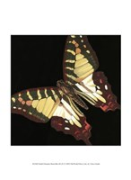 """Small Dramatic Butterflies III by Vision Studio - 10"""" x 13"""" - $10.49"""