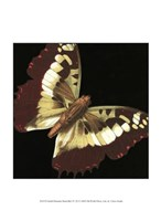 """Small Dramatic Butterflies IV by Vision Studio - 10"""" x 13"""""""