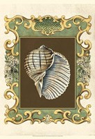 "Small Mermaid's Shells I by Chariklia Zarris - 13"" x 19"""