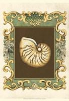 "Small Mermaid's Shells II by Chariklia Zarris - 13"" x 19"""