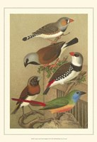 Cstm Cassel's Pet. Songbirds I Fine Art Print