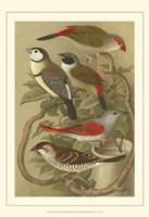 """Cstm Cassel's Pet. Songbirds II by Cassell - 13"""" x 19"""""""