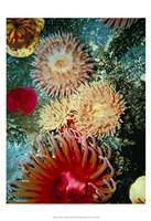 "Graphic Sea Anemone III by Vision Studio - 13"" x 19"" - $12.99"