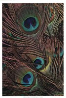 """Peacock Feathers IV by Vision Studio - 13"""" x 19"""""""