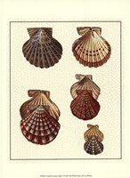 Crackled Antique Shells I Fine Art Print