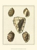 Crackled Antique Shells IV Fine Art Print