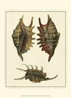 Crackled Antique Shells V Fine Art Print