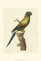 Crackled Antique Parrot I Fine Art Print