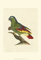 Crackled Antique Parrot II Fine Art Print