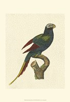 Crackled Antique Parrot III Fine Art Print