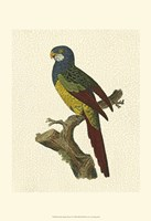 Crackled Antique Parrot IV Fine Art Print
