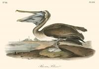 Brown Pelican (horizontal) Fine Art Print