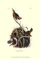 "Marsh Wren by John James Audubon - 13"" x 19"""