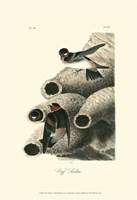 "Cliff Swallow by John James Audubon - 13"" x 19"""