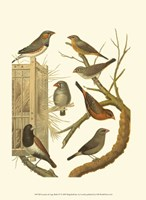 """Canaries & Cage Birds IV by Cassell - 10"""" x 13"""""""