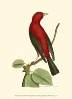 Crimson Birds III Fine Art Print