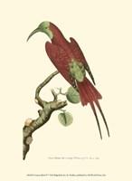 Crimson Birds IV Fine Art Print