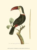 Crimson Birds VI Fine Art Print